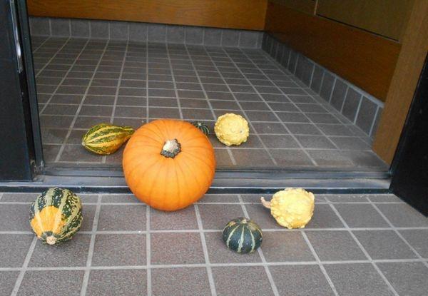 ハロウィンパンプキンの収穫