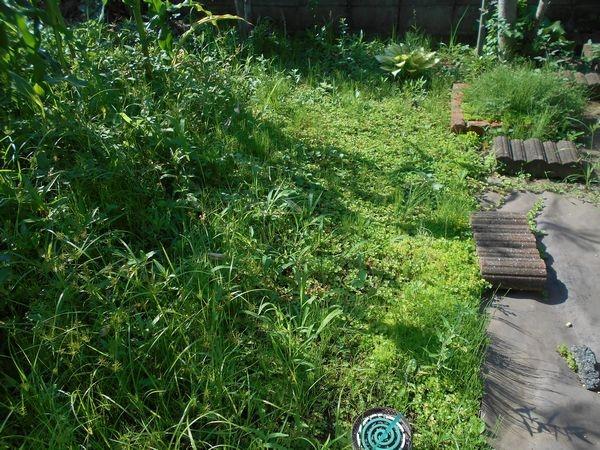 ヘビイチゴと雑草