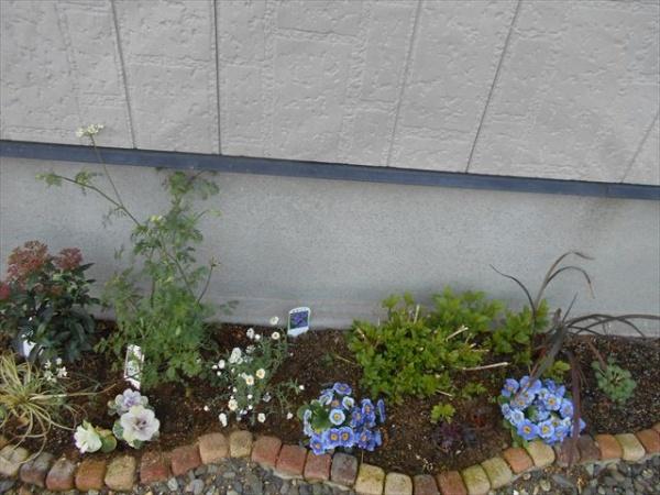 オルラヤの花壇3月28日