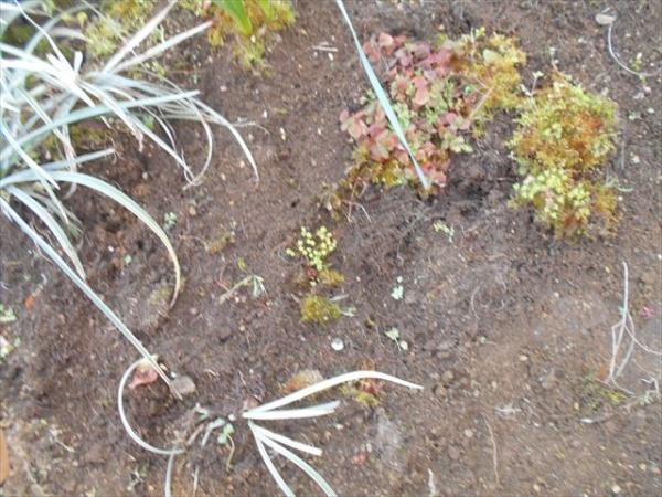 草むしりで見つけた緑色の小さな粒