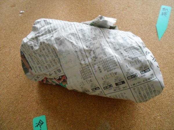 新聞紙でチューリップの球根を包む