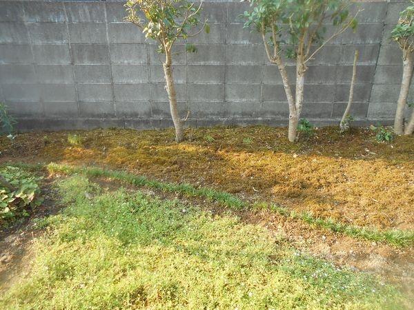 苔のグランドカバー