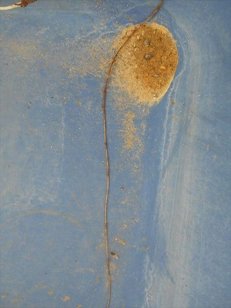 ヤブガラシの根2
