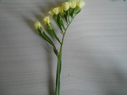 スターチスの花