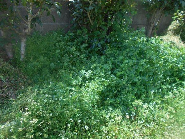 茶花用の花壇を作る場所