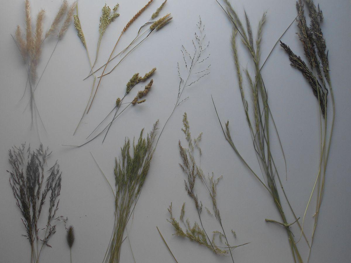 春の雑草のドライフラワー