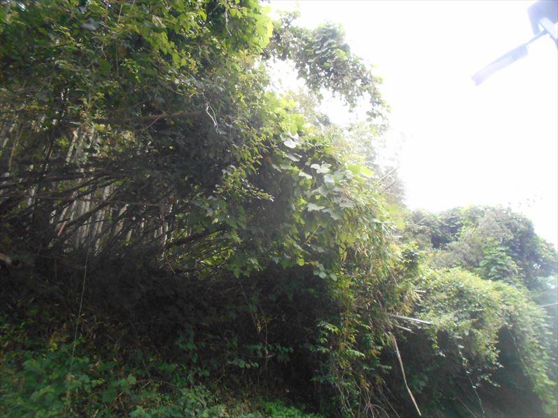ツタの茂る山